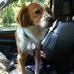 Adopt_Jasper_BRIT_1