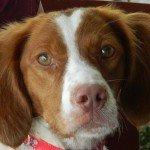 Adopt_Mollie_BRIT_01
