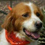 Adopt_RILEY_Brittany_TX_1
